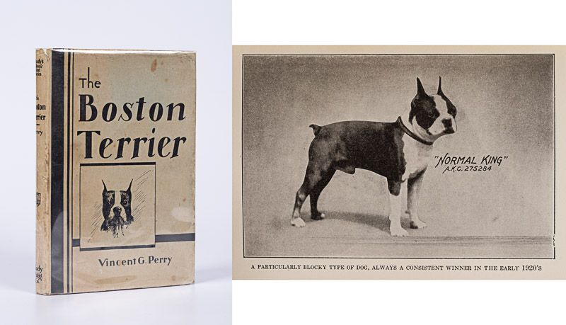 Perry, The Boston Terrier.